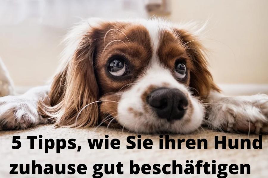 Den Hund Zuhause beschäftigen
