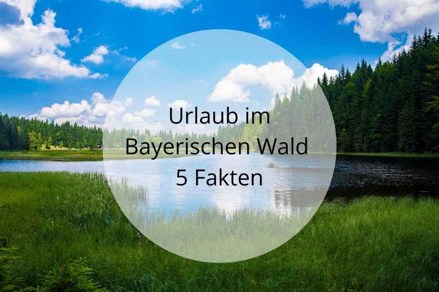 UrlaubBay.Wald900x600